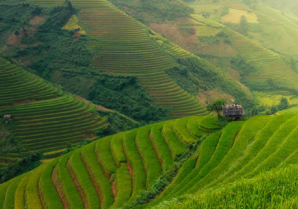 Uno de los paisajes más lindos y únicos son los arrozales en Vietnam.