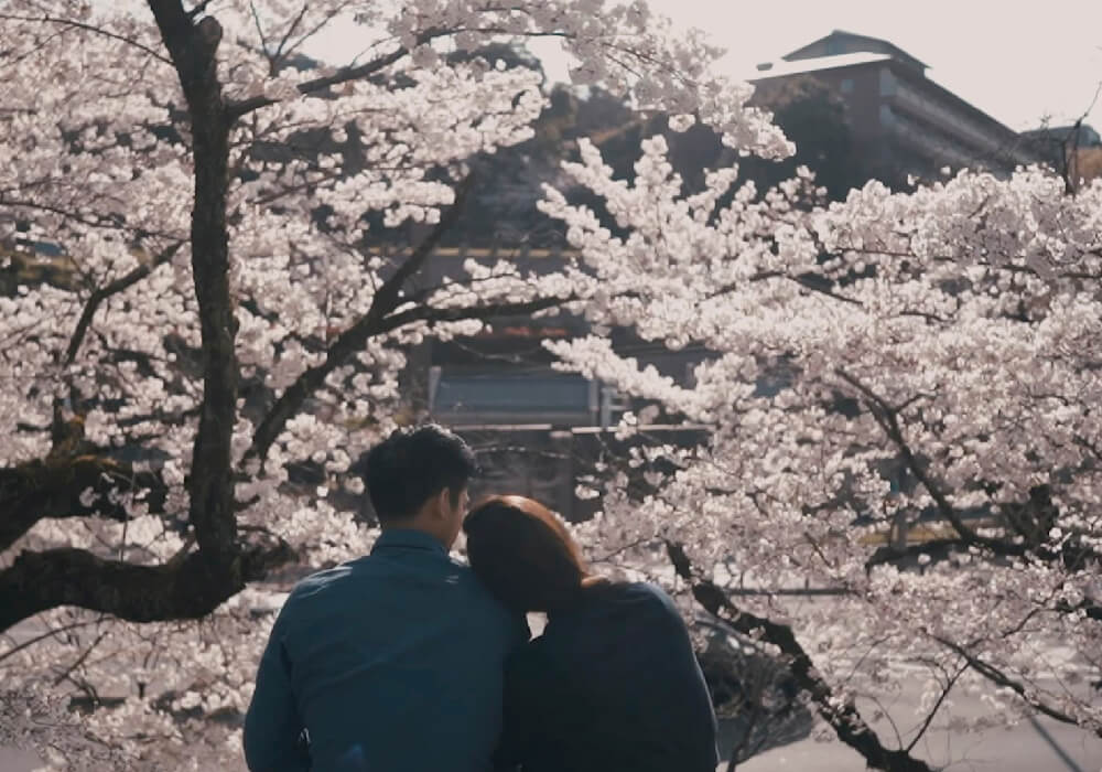 La floración de estos hermosos árboles se da en Sakura.
