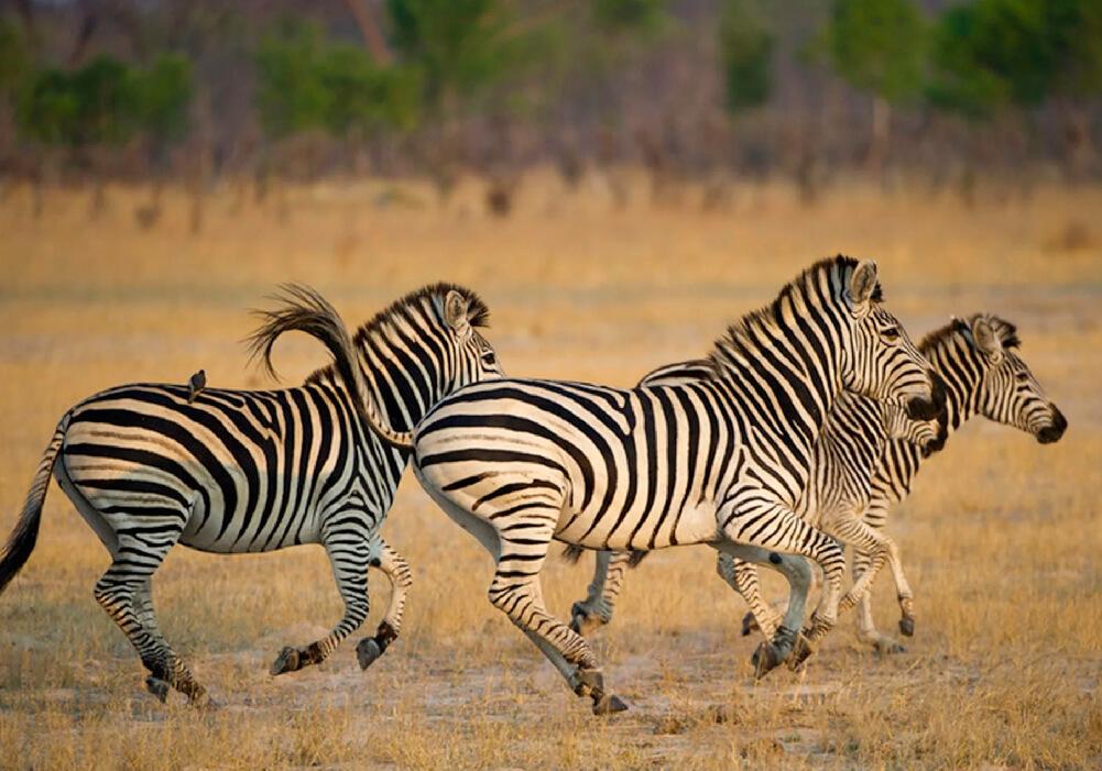 País conocido por sus espectaculares paisajes y su fauna tan diversa.