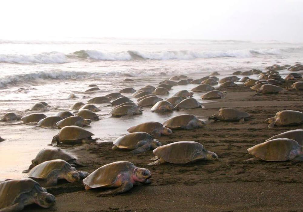 Este es uno de los parques más famosos de Costa Rica, en dónde las tortugas van a poner sus huevos.