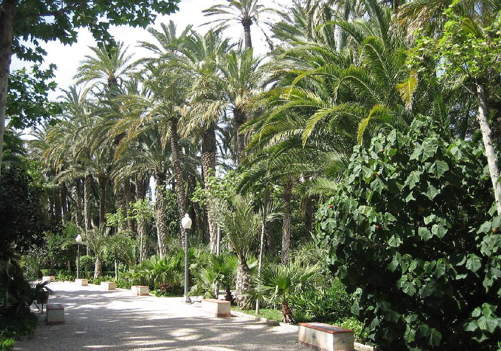 Huertos de palmera, es el palmeral más grande de Europa.