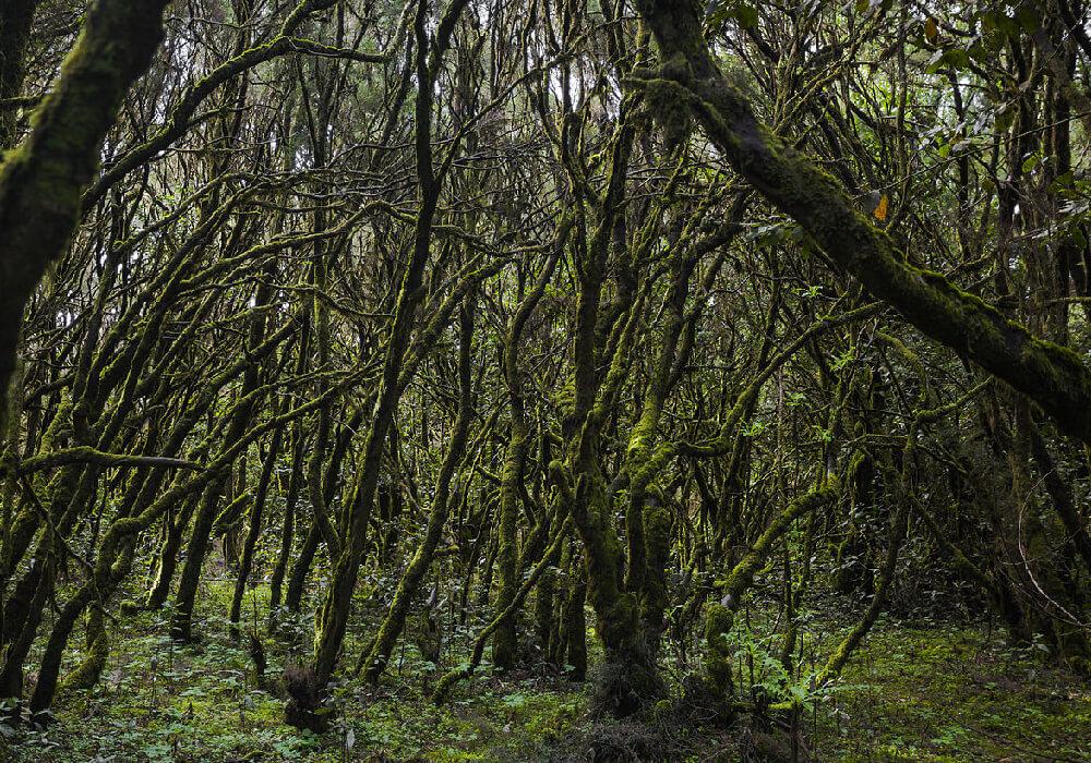 Un parque que es Reserva de la Biosfera, es actualmente el parque nacional mas joven de Canarias.