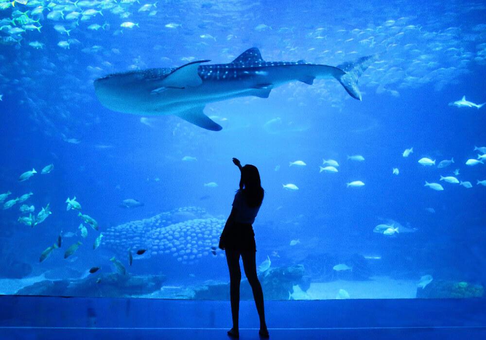 Palma Aquarium, Mallorca.