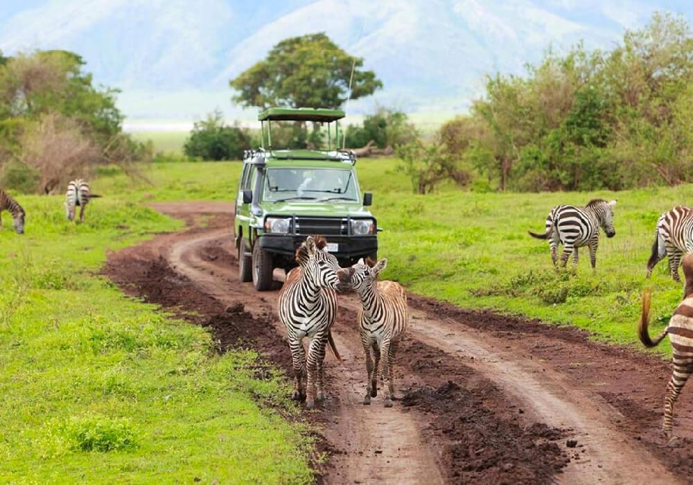 Viajar a la vida salvaje nunca fue tan esperado como ahora, sal de la rutina y respira aire puro.