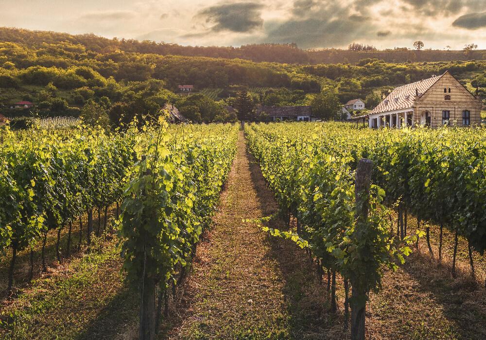 No olvides que al realizar la ruta del vino puedes descubrir lindos paisajes de diversos viñedos a tu alrededor.