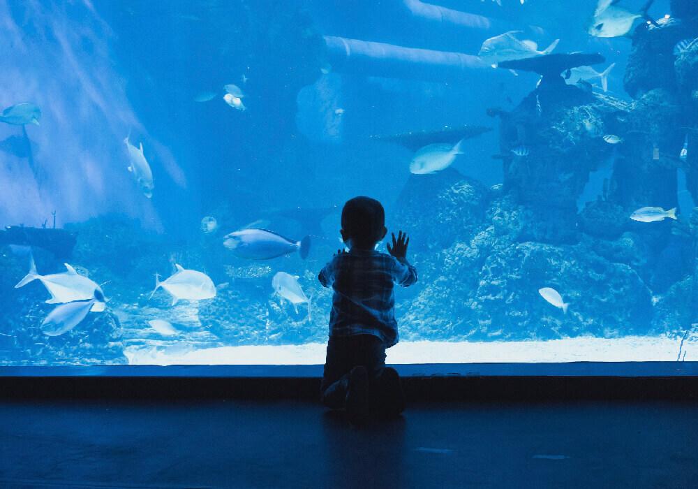 El acuario interno del Museo es ideal en tu viaje con niños a Cantabria.