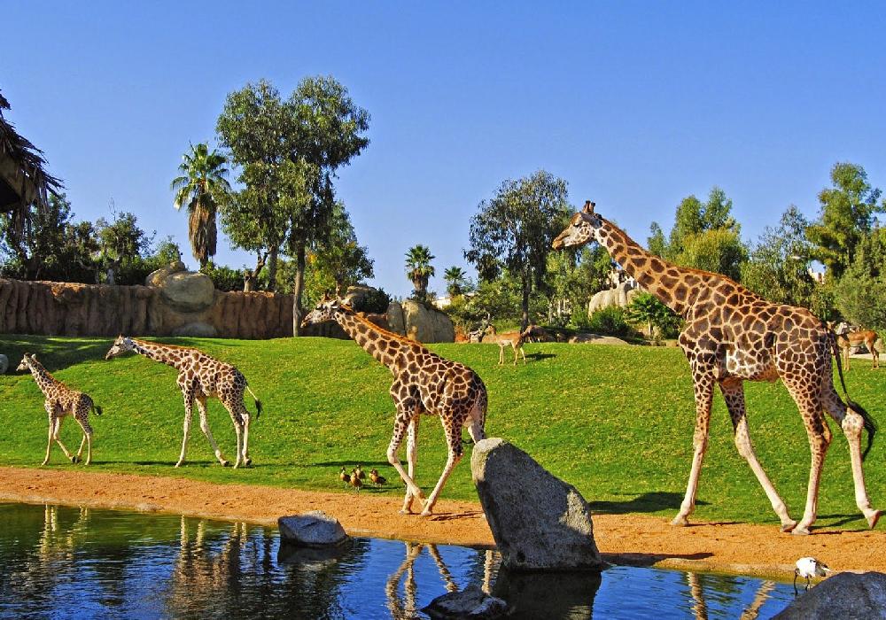 Conoce el zoo en tu fin de semana en la Comunidad Valenciana y ayuda a promover el cuidado de las especies.