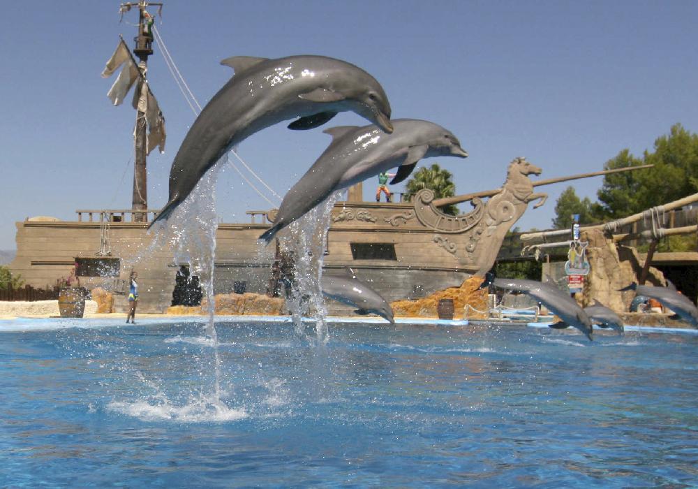 Entre las múltiples atracciones en Comunidad Valenciana encontrarás Mundomar, un parque dónde podrás tener contacto con animales marinos.