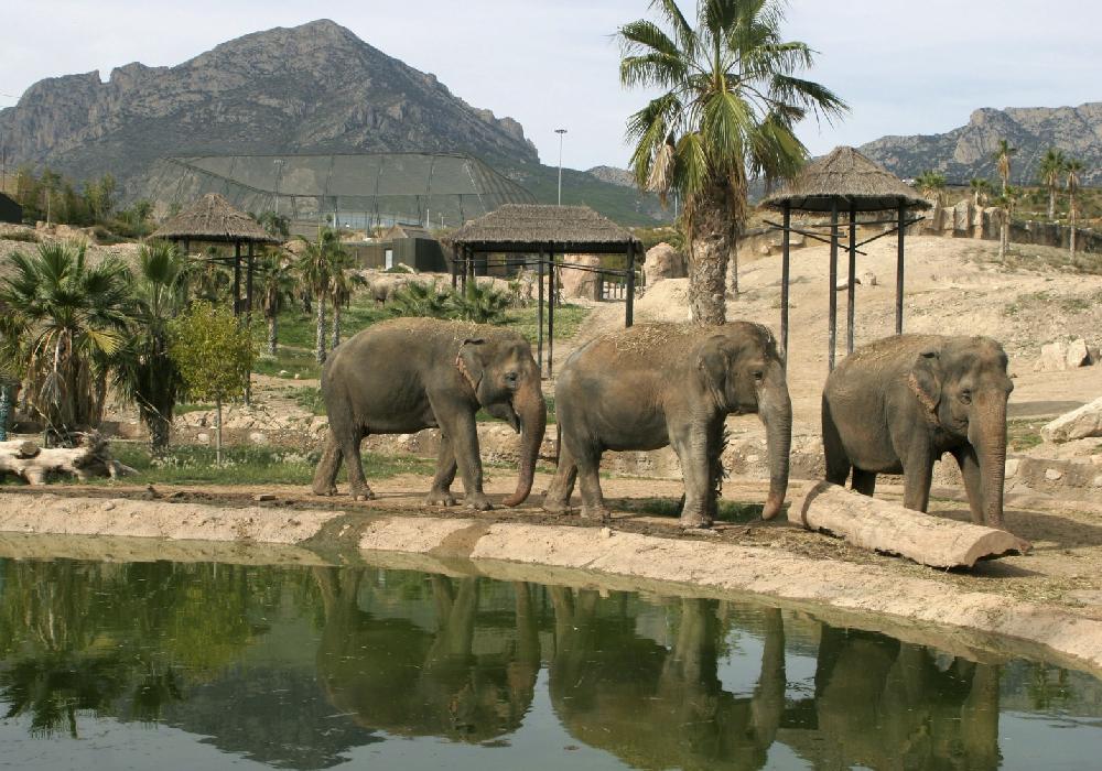 En tu viaje a Comunidad Valenciana Terra Natura es un lugar que promueve la protección de especies.
