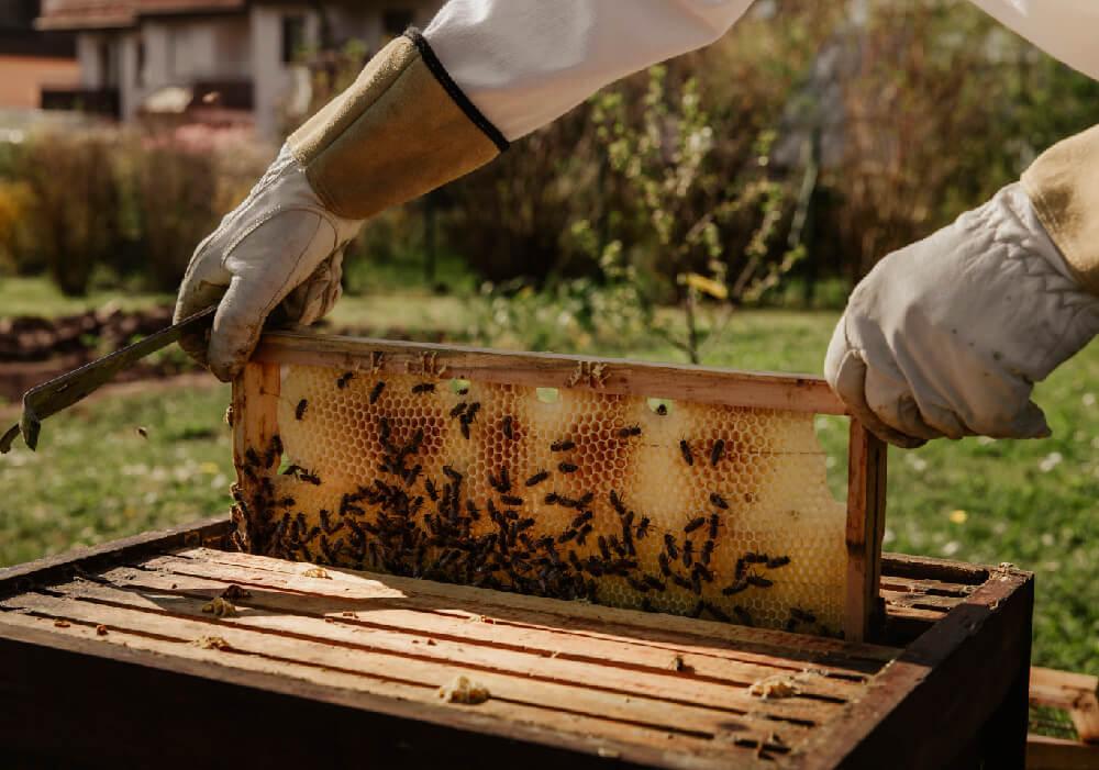 En algunas casas rurales de Navarra se dedican a la apicultura.