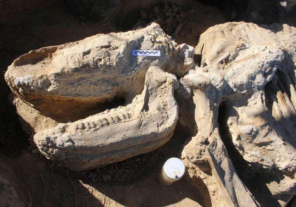 fosiles de dinosaurio en la rioja