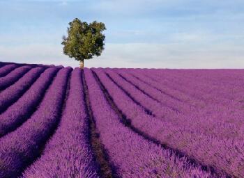 Viajes Castilla La Mancha 2019-2020: La Alcarria y Pueblos Negros Puente 1° Mayo 2020