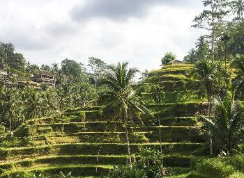 Viajes Indonesia 2019-2020: Viaje a Bali: Circuito para Novios