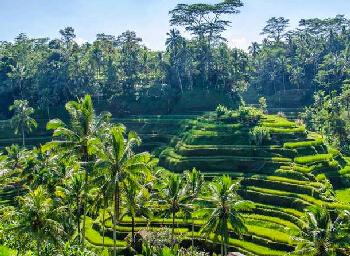 Viajes Bali 2019-2020: Circuito Bali al completo - Viaje Mayores 55 años