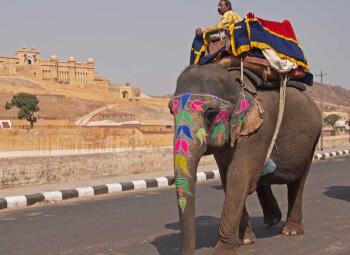 Viajes India 2019-2020: Circuito Triángulo Dorado