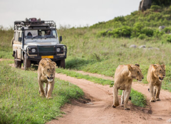 Viajes Kenia y Tanzania 2019-2020: Circuito La Gran Migración: Kenia y Tanzania