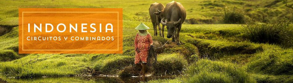 Circuitos por Indonesia 2019