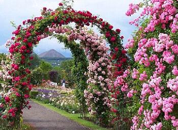 Jardín de las Rosas (Tailandia)