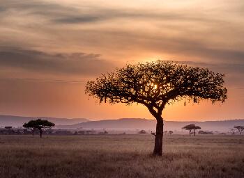 Viajes Sudáfrica y Zimbabue 2019-2020: Circuito Sudáfrica y cataratas Victoria - Viaje Mayores 55 años