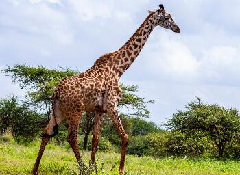 Viajes Kenia e Islas del Índico 2019-2020: Luna de Miel en Kenia y Playas del Indico (Zanzibar), Viaje de Novios